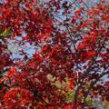 川越 喜多院の紅葉 29
