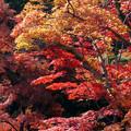 川越 喜多院の紅葉 34