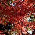 川越 喜多院の紅葉 35