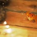 写真: 金魚