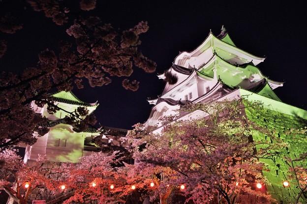 伊賀上野城  夜桜