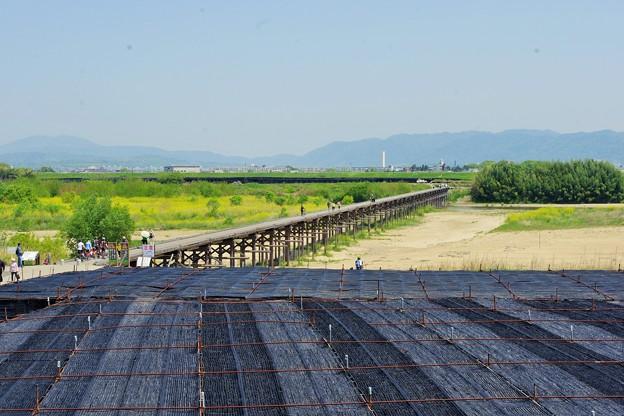 流れ橋と茶畑