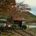 写真: 長谷寺  月輪院