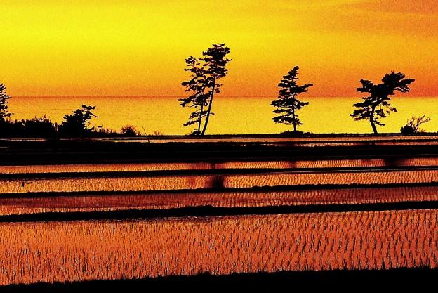 田んぼと海