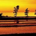 写真: 田んぼと海