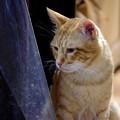 写真: 2009年11月01日のボクチン(5歳)