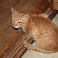 写真: 2008年11月07日のボクチン(4歳)