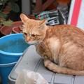 写真: 2008年11月09日のボクチン(4歳)
