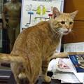 写真: 2008年11月13日のボクチン(4歳)