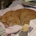 写真: 2011年11月19日のボクチン(7歳)
