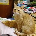 写真: 2008年11月29日のボクチン(4歳)
