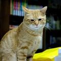 写真: 2008年12月01日の茶トラのボクチン(4歳)