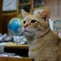 写真: 2008年12月05日のボクチン(4歳)