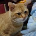 写真: 2009年12月05日の茶トラのボクチン(5歳)