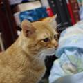 写真: 2009年12月05日の茶トラのボクちん(5歳)