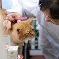 写真: 2009年11月07日のボクチン(5歳)