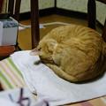 写真: 2010年12月13日のボクチン(6歳)
