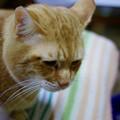 写真: 2010年12月25日の茶トラのボクちん(6歳)
