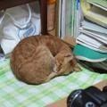 写真: 2010年01月12日の茶トラのボクチン(5歳)