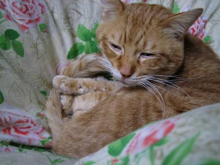 2010年01月27日の茶トラのボクチン(5歳)
