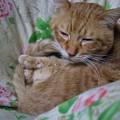 写真: 2010年01月27日の茶トラのボクチン(5歳)