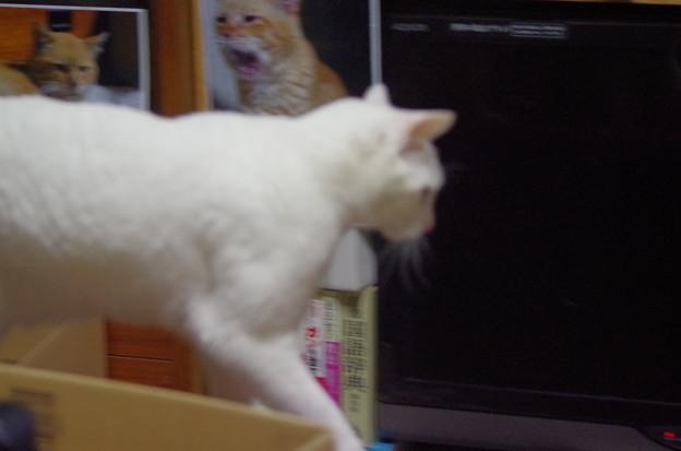 2017年4月21日のシロちゃん(雌4歳)