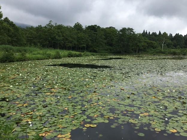1702-いもり池1