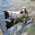 Photos: 散歩は水遊び~