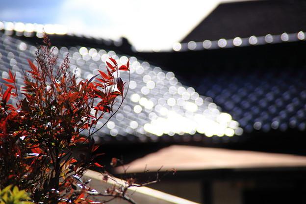 風に靡く南天と屋根瓦