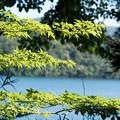 写真: 湖畔の散歩道