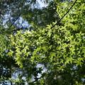 空高く、木茂る