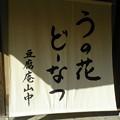 写真: 解説~初夏の挨拶