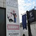 Photos: かわい子ちゃん