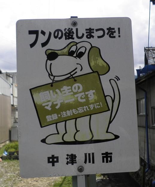 犬糞~中津川市