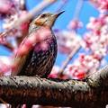 写真: もう、春ですね。