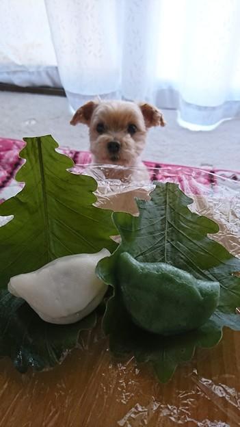 食べたいな。。。