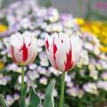 春花壇<1>