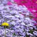 春花壇<2>
