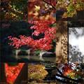 お気に入りの秋