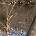 写真: 近くの鳥より