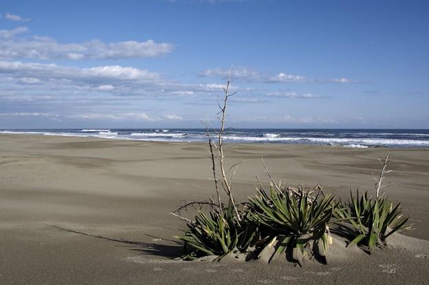 冬の太平洋(3)