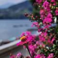 写真: 花撮りは不得意