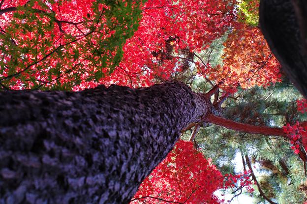 写真: 天上の紅