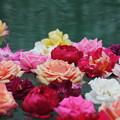 池に浮かべられた薔薇