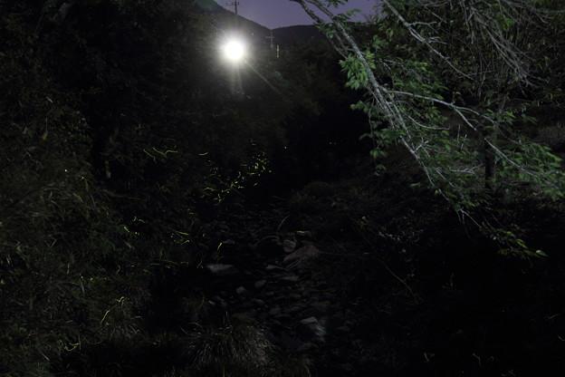 水俣茂川ここは明かりが多い