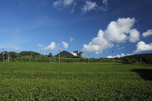 帰りの茶畑