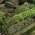 写真: 丸い葉