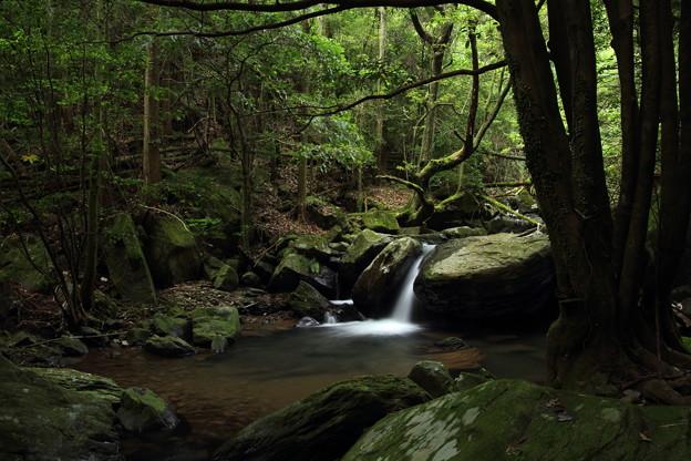 途中の渓流