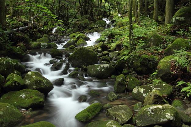 寒川の渓流