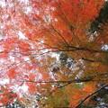 住吉神社の紅葉